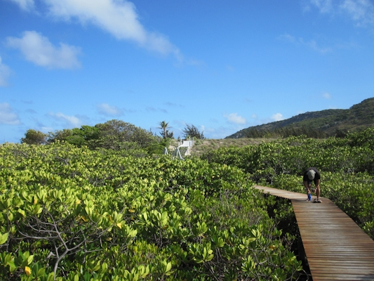 boardwalk_across_lizard_island