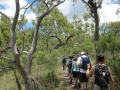 bush_walking