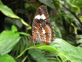 we_visit_a_butterfly_sanctuary